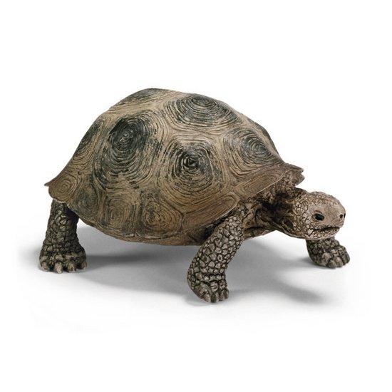 슐라이히 거북이