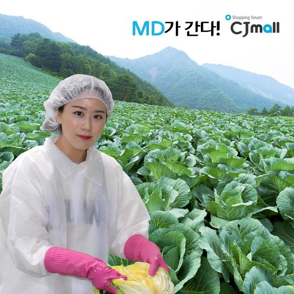 [MD방문상품]Haccp인증 강원도 고랭지 절임배추 22kg 7-10포기