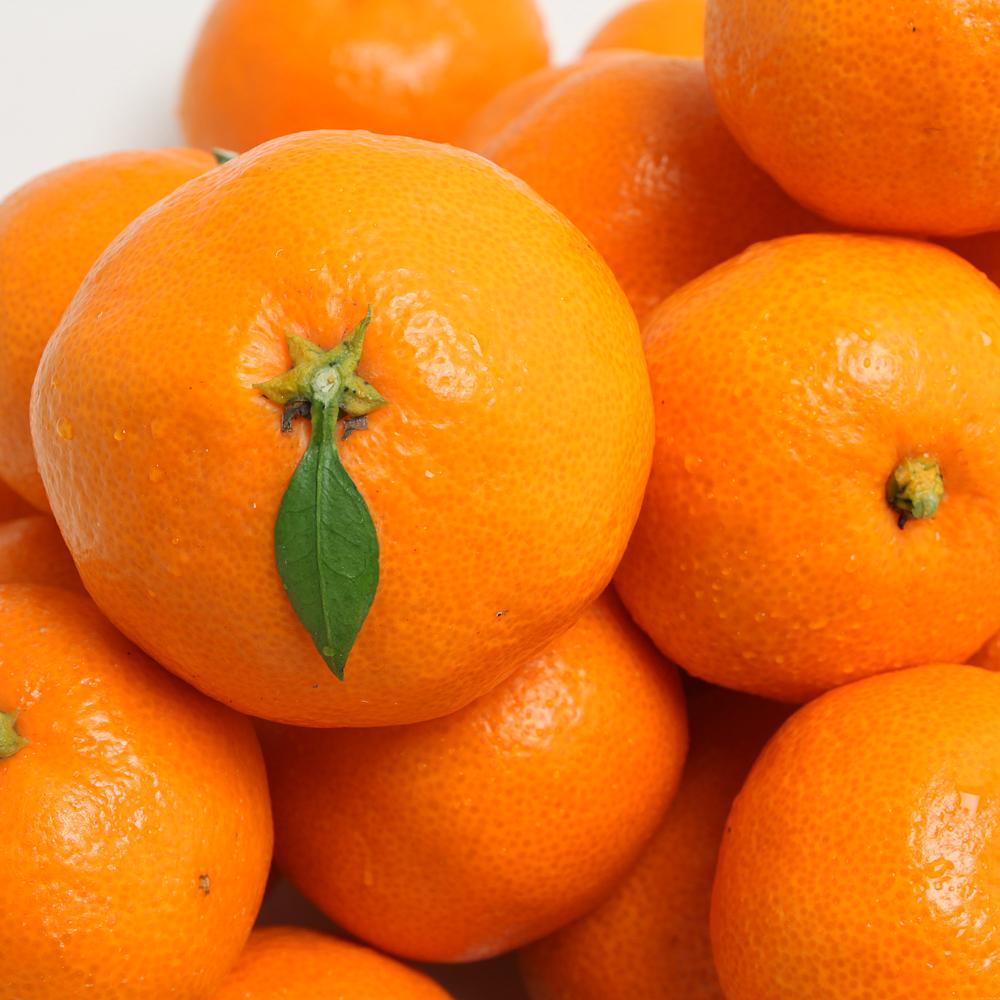 [노란열매]제주 노지 감귤 5kg 로얄과