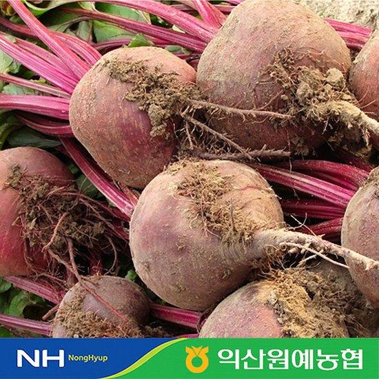 농협 국내산 레드비트5kg개당중량180-300g