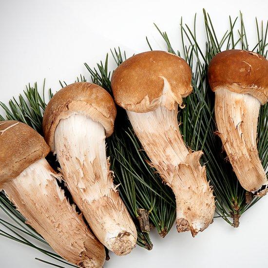 솔향 가득 국내산 무농약 참송이버섯 골라담기