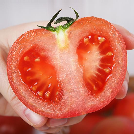 싱그러운 국내산 정품 찰토마토 5kg