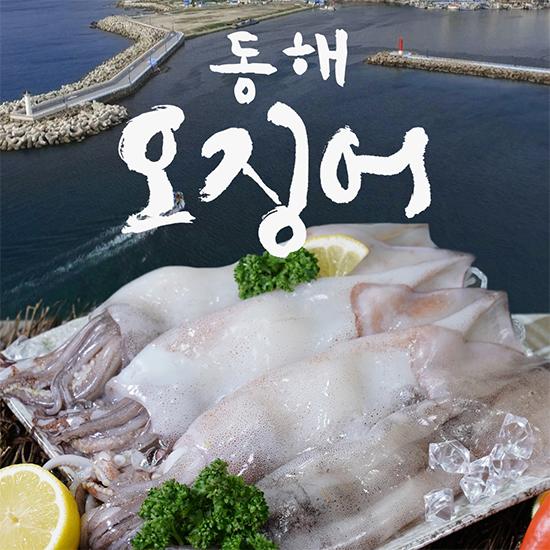 [오플]국내산 손질 동해 오징어 220gx11팩, 총 22미